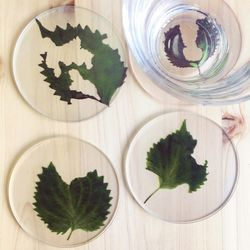 토메이 코스터 SET - 나뭇잎