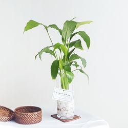 수경재배 실내공기정화식물 기획전-스파티필름
