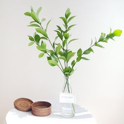 생화 루스커스 5p 부쉬세트 (오목형유리병포함)
