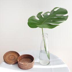 생화 대형 몬스테라 1p 가지 (오목형유리병포함)