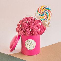 화이트데이 한정 시그니처 핑크 막대사탕 모스틴 스칸디아모스