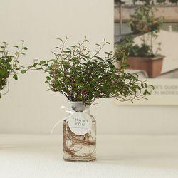 [plant] 공기정화식물 트리안 수경식물set