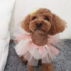 강아지러블리케이프(체리)