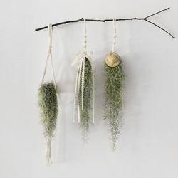 마크라메 공기정화 식물 수염 틸란