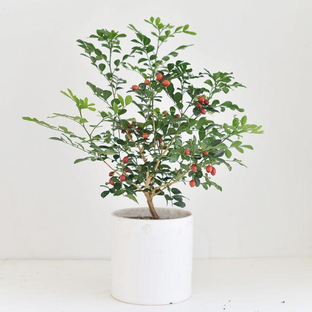 공기정화 식물 화분