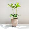 공기정화식물 멕시코소철 토분세트