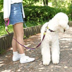 강아지 리드줄 스타일팝