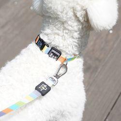 강아지 목줄 스타일팝