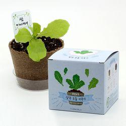팜팜농장 - 상추 모종키우기