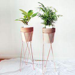 뱅갈나무 테이블야자 토분화분세트 (스탠드추가+전지역택배)