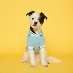 강아지옷 V넥 피케 셔츠 - 스카이블루