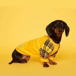 강아지옷 체크 맨투맨 - 옐로우