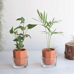 미니 식물 수경재배 인테리어 소품 2개 세트