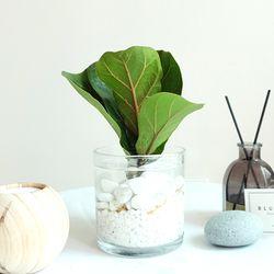 수경재배 실내공기정화식물 기획전-떡갈고무나무