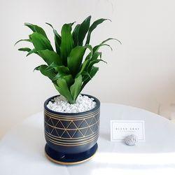 공기정화식물 콤팩타 고급스러운 블랙 화분세트