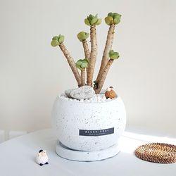 예쁜 다육식물 녹비단 둥근 화분세트 (피규어추가)