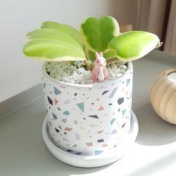 사랑스러운 다육식물 하트호야 화분세트