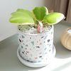 사랑스러운 다육식물 하트호야 화분세트 (피규어추가)