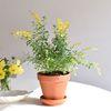 애니시다 봄꽃 공기정화 식물 화분세트