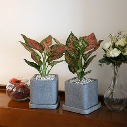 루체 화분 엔젤 공기정화식물