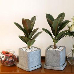 루체 화분 멜라니 고무나무 공기정화식물
