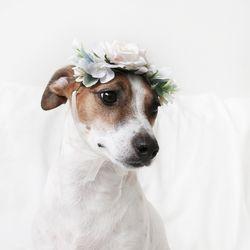 고양이 강아지 화이트로즈 화관 꽃 머리띠 옷 모자 Miyopet