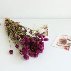 천일홍꽃 드라이플라워
