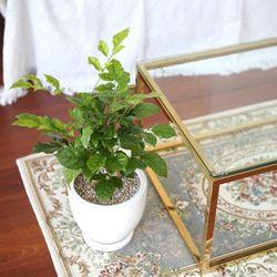 테라조 화분 녹보수 중형 공기정화식물