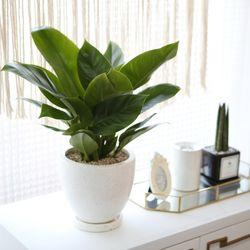 테라조 화분 콩고 중형 공기정화식물