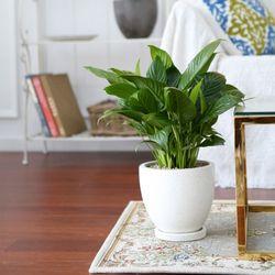 테라조 화분 스파트 필름 중형 공기정화식물