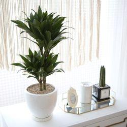 테라조 화분 콤팩타 중형 공기정화식물