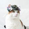 고양이 강아지 블루 로즈 화관 꽃 머리띠 옷 모자 Miyopet
