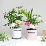 공기정화식물 카네이션픽 화분선물세트(쇼핑백포함)