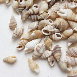 자연조개껍질줄무늬소라100g