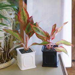 몰딩 화분 오로라 공기정화식물