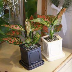 몰딩 화분 엔젤 공기정화식물