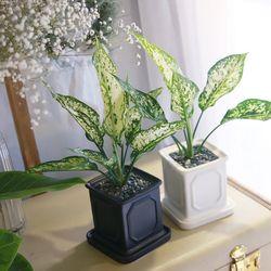 몰딩 화분 스노우 사파이어 공기정화식물