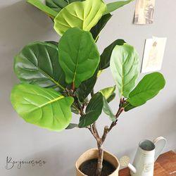 대형 떡갈 고무나무 화분 - 인테리어조화 조화나무