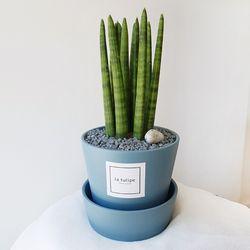 공기정화식물 스투키 중형 블루화분세트