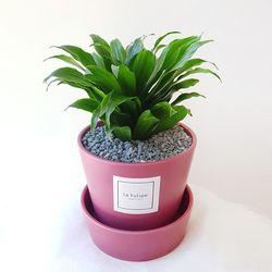 공기정화식물 콤팩타 중형 핑크화분세트