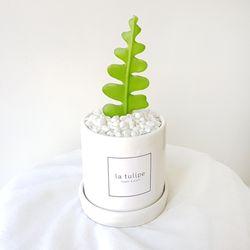 피쉬본 선인장 화분세트 특별한 공기정화식물