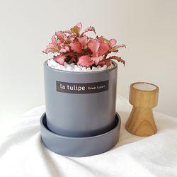 피토니아 핑크스타 꽃처럼 예쁜 공기정화식물 화분세트