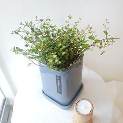 트리안 화분세트 공기정화식물 습도조절식물