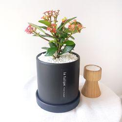 꽃기린 다육이 중형 블랙화분세트 공기정화식물