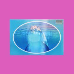 LENTICULAR CARD DOLPHIN