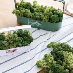 25g 천연이끼 공기정화 식물 스칸디아모스 단품 그린