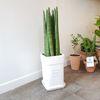 스투키 공기정화식물 중형 화분 개업화분 (퀵비별도)