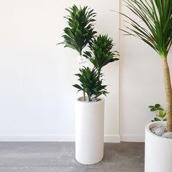콤팩타 공기정화식물 중대형 테라조화분 (퀵비별도)