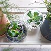 아쿠아볼- 수생식물 투명유리볼