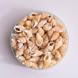 미니 소라껍질(약 100개)